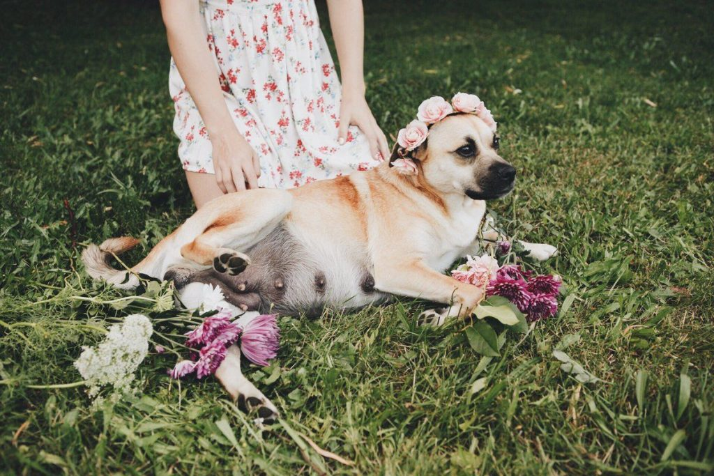 dog maternity shoot with flowers