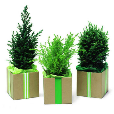 plants for gift
