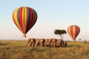 safari honeymoon destination